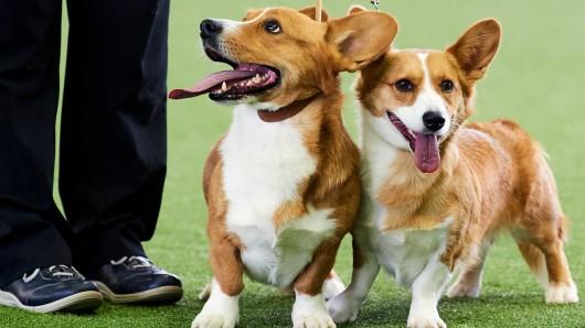 """Noch bis einschließlich Sonntag, den 19. Mai, läuft die """"Hund und Katz"""" Messe in Dortmund."""