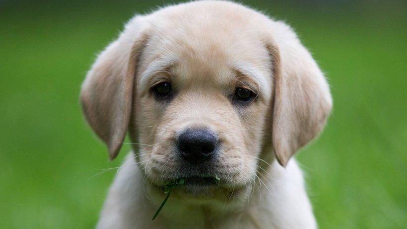 Hund völlig verstört aufgefunden – neben ihm liegt eine Nachricht, die todtraurig macht