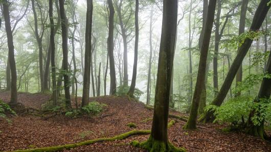 Mitten im Wald fand die Polizei der Mecklenburgischen Seeplatte eine Wäscheleine mit Damenwäsche aufgehängt. (Symbolbild)
