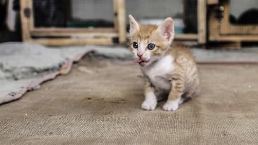 Retter haben in Bochum hilfsbedürftige Kätzchen aufgelesen. (Symbolbild)
