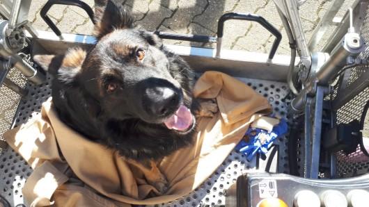 Erwartungsvoll blickt der gerettete Hund auf seinen Lohn.