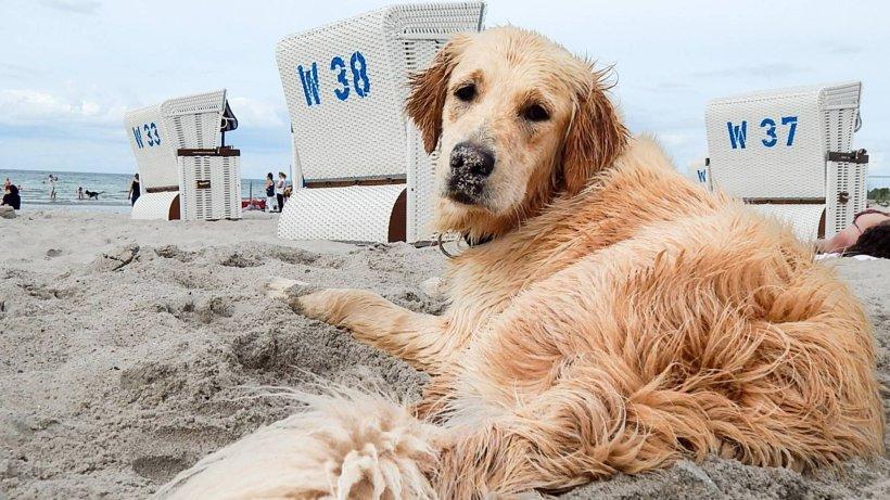 Hund wird lebendig am Strand begraben – dann wird das ganze Ausmaß der Grausamkeit deutlich