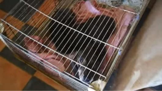 In viel zu kleinen Käfigen waren die Hunde in einem Wohnhaus in Rheinland-Pfalz eingepfercht.