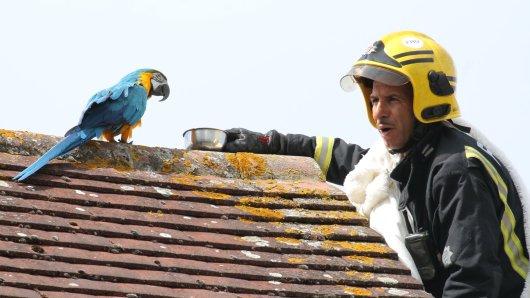 Ein Feuerwehrmann versuchte in London den Papagei vom Dach zu retten.