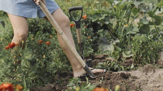 Im Garten machte eine Frau eine brisante Entdeckung. (Symbolbild)