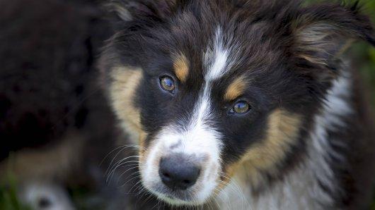Ein Hund ist in NRW einfach ausgesetzt worden. (Symbolbild)