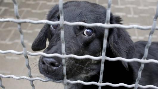 Ein Hund musste in einem US-Tierheim schrecklich leiden. (Symbolbild)