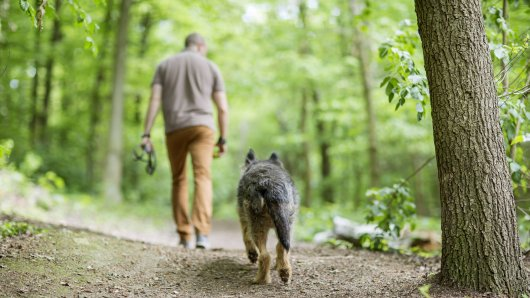 Markus geht in NRW mit seinem Hund spazieren, als er plötzlich vor lauthals anfangen muss zu lachen. (Symbolbild)