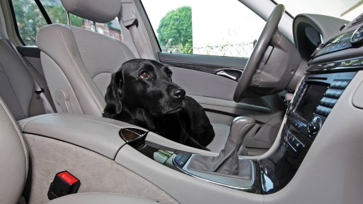 Hund Max sollte man niemals alleine im Auto lassen. (Symbolbild)