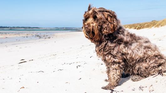 Hund Dorian wurde in Griechenland am Strand gefunden. (Symbolbild)