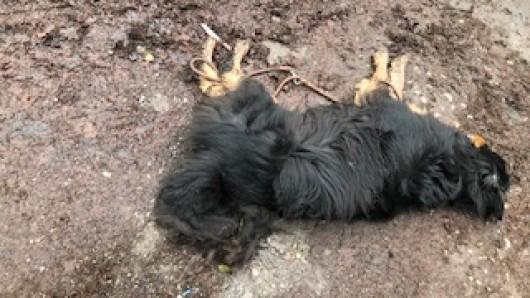 Schrecklich: Hund Jackson ist in einem Mülheimer Waldstück attackiert worden. Er erlag vor Ort seinen Verletzungen.