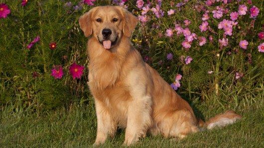 Hund: Ein Besuch beim Hundefriseur endete tödlich (Symbolbild).