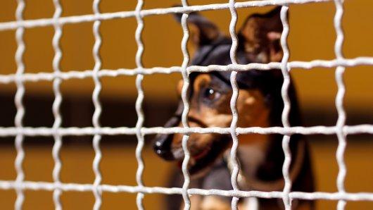 Hund in NRW: Vierbeiner erlebt Odyssee – Tierheim-Mitarbeiter sind schockiert: Widerwärtige Menschen (SYMBOLBILD).
