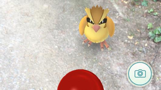 Ein Taubsi-Pokémon hat sich auf den Hauptfriedhof Gelsenkirchen verirrt.