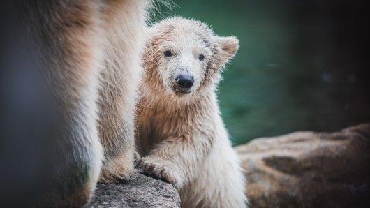 Die Zoom Erlebniswelt ist zum beliebtesten Zoo Deutschlands gekürt worden. (Archivbild)