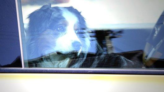 Ein Hund musste in Gelsenkirchen in der Hitze ausharren. (Symbolbild)