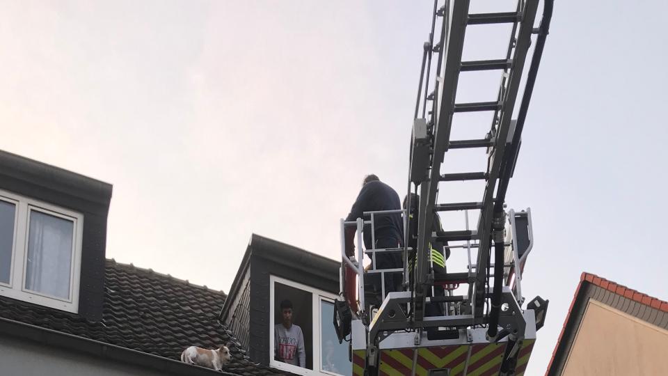 Ein Hund in Gelsenkirchen ist auf ein Dach ausgebüxt.