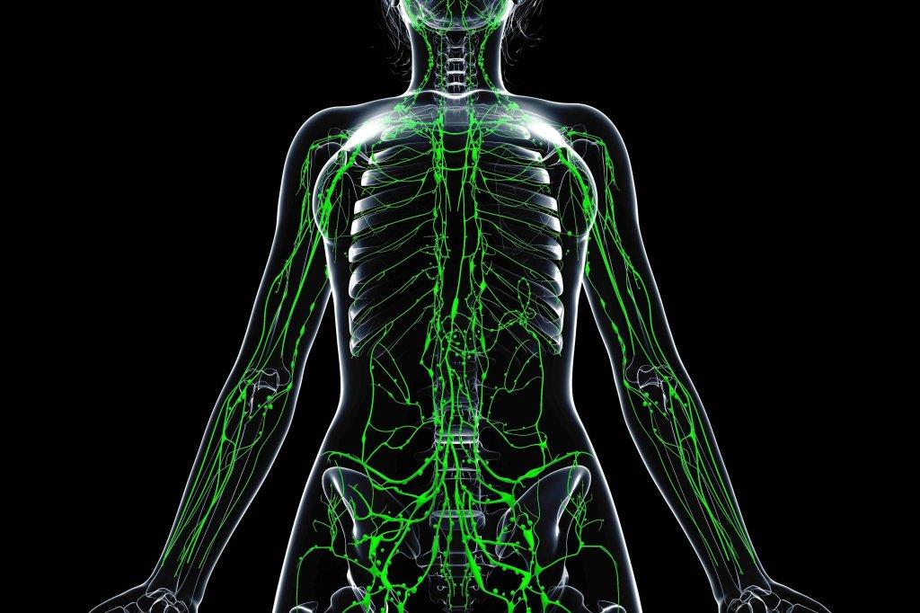 Wie uns Lymphknoten helfen, gesund zu bleiben - Gesundheit ...