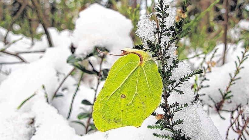 Schmetterlinge im Winter - Heiligenhaus - derwesten.de