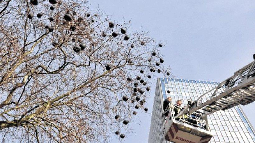 Lungenbaum vor dem kalderoni haus duisburg for Luftballons duisburg