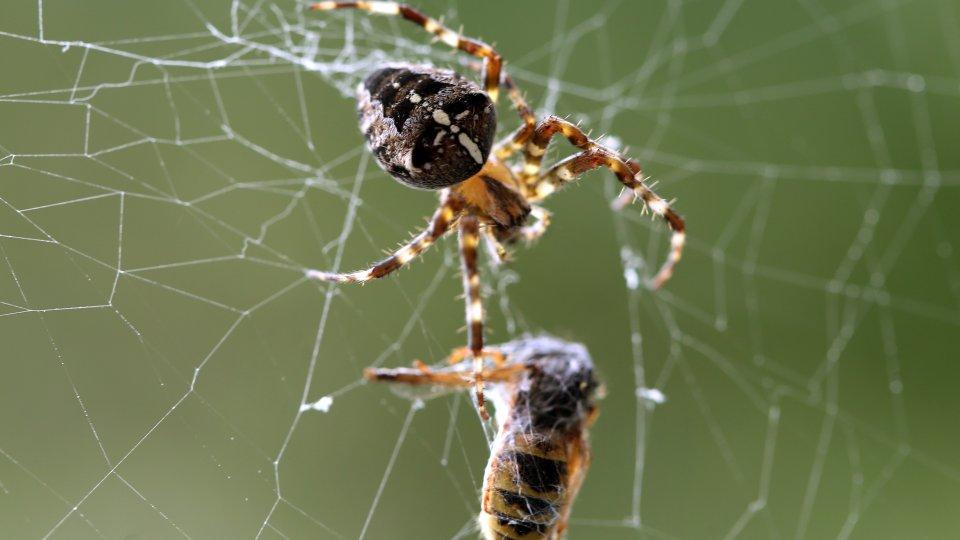 Bisse Stiche Gift Neun Irrtumer Zu Spinnen Und Insekten