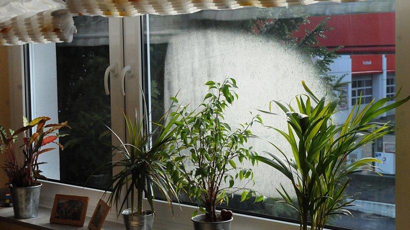 kondenswasser am fenster woher es kommt und was dagegen. Black Bedroom Furniture Sets. Home Design Ideas