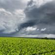 Wetter Wolken Sommer Gewitter Rüben Monokultur Ruhrgebiet , auf einem Acker an der Meisenburgstraße in Essen