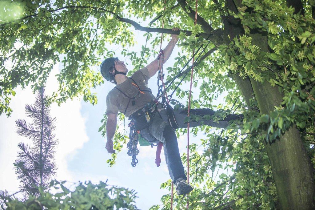 Klettergurt Für Baumpflege : Unterwegs mit einem baumpfleger klettern im meter baum
