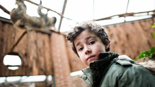 Dem sechsjährigen Mats ist im Dortmunder Zoo ein Faultier auf den Kopf gefallen.