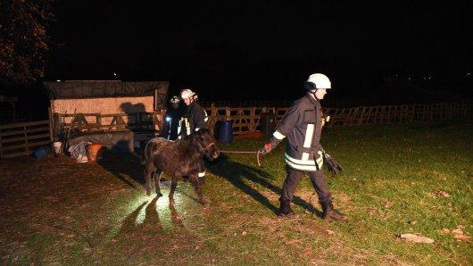 Die Feuerwehr brachte mehrere Tiere in Tierkliniken.