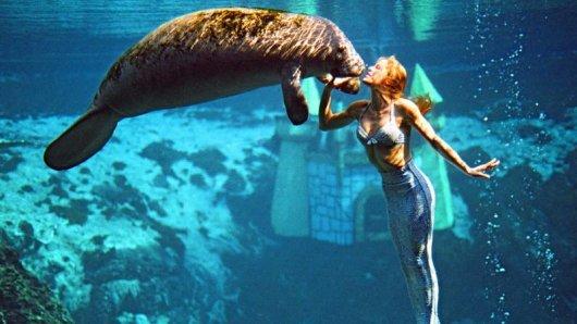 Meerjungfrau trifft Seekuh: eine tierisch-menschliche Begegnung unter Wasser.