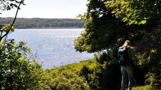 Immer am Mariager Fjord entlang führt der neue Wanderweg in Dänemarks Naturregion Bramslev Bakker. Die Panoramaroute wurde vom Deutschen Wanderinstitut ausgezeichnet.