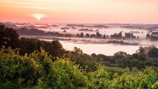 Die Loire fließt vorbei an idyllischen Weinbergen.
