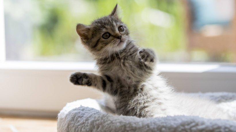 essen  katzenbaby sorgt f u00fcr vollsperrung auf der a52