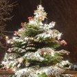 Der Weihnachtsbaum in Moers Scherpenberg.