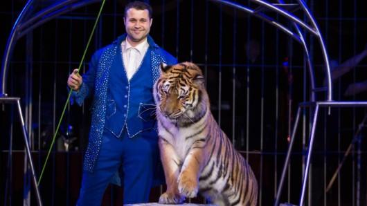 """Beim """"Moskauer Circus"""" gibt es ein Raubtierprogramm mit Tigern."""