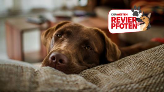 Für manche Hunde ist es kein Spaß in einer Wohnung zu leben. (Symbolbild)