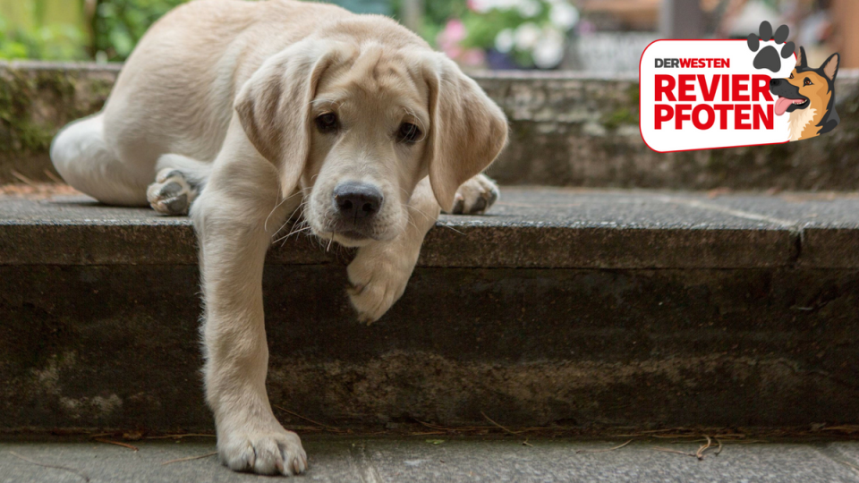 Expertin verrät wie lange du deinen Hund alleine lassen
