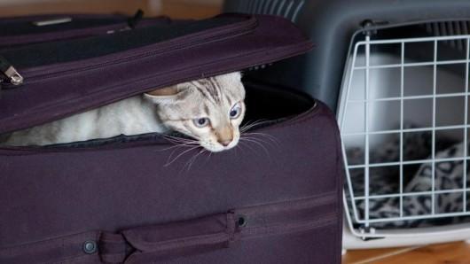 Katze in den Koffer stecken? Nein, so einfach gehen Tiere nicht auf eine Flugreise - Besitzer müssen einiges beachten.