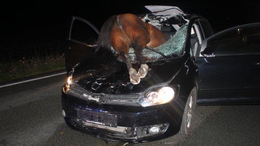 Das Pferd ist bei dem Unfall in Versmold durch die Windschutzscheibe gekracht.
