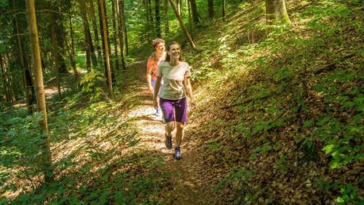Der 7-Berge-Weg im Schwarzwald führt auch durch ausgedehnte Mischwälder.