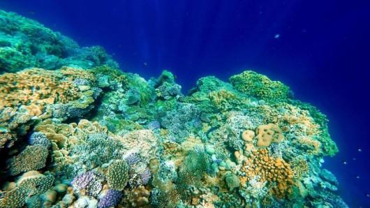 Die Unterwasserwelt ist ein empfindliches System. Bestimmte UV-Filter in Sonnencremes schaden Korallen und Fischen.