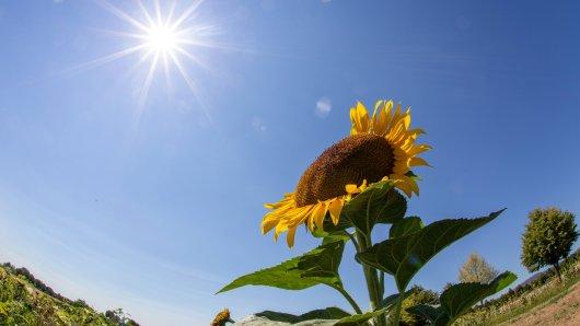 Das Wetter in NRW wird diese Woche besonders gut. (Symbolfoto)