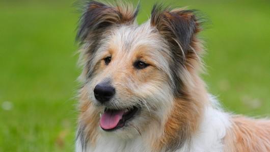 Hund: Er überlebte das Ablecken seines Hundes nicht. (Symbolbild)