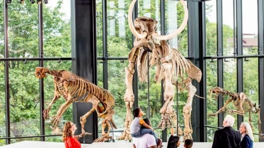 Archäologische Funde: Das Burke Museum of Natural History and Culture in Seattle wurde kürzlich wiedereröffnet.