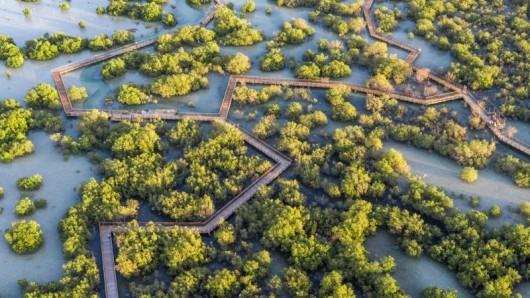 Der Jubail Mangrove Park in Abu Dhabi ist ein natürlicher Mangrovenwald - neue Wege aus Holz führen Besucher jetzt über das Wasser.
