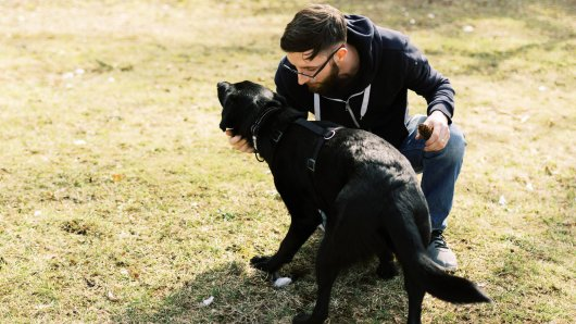 Hund: Der Mann wollte seinem Tier etwas beibringen, doch dann landete er im Gefängnis. (Symbolbild)