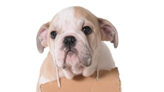 Hund: Das Tier sollte verkauft werden, doch die Aktion nahm eine traurige Wende. (Symbolbild)