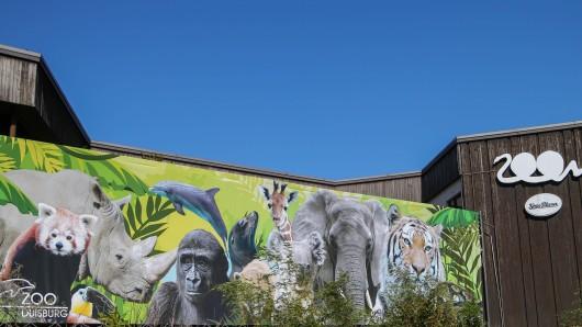 Zoo Duisburg: Das Hitze-Wetter bringt einige skurrile Aktionen mit sich. (Symbolbild)