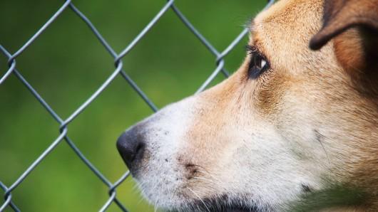 Hund: Jack-Russel Timmy möchte endlich nicht mehr im Tierheim leben. (Symbolbild)